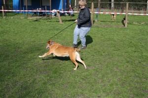 Training mit der Reizangel auf dem Hundeplatz in Gladbeck