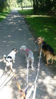 Personensuche: Hunde vom Tierschutz aus dem Ausland warten auf ihren Einsatz beim Mantrailing in Gladbeck