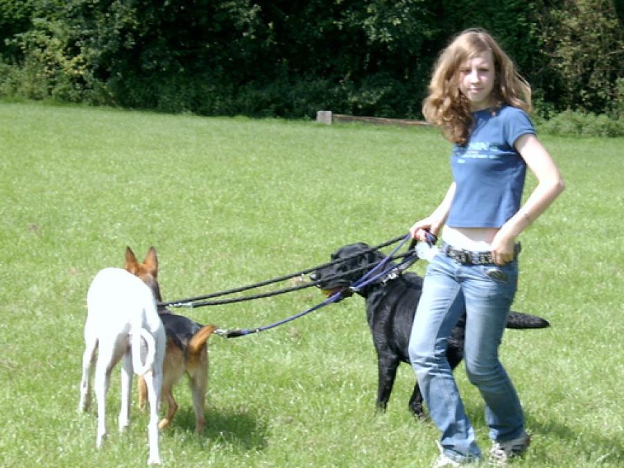 Leinenführigkeit, damit kein Hund mehr an der Leine zieht wird ohne schmerzen intensiv Trainiert, egal ob an Halsband oder Geschirr in der Hundeschule Traum-Hunde in Gladbeck beim Windhundauslauf