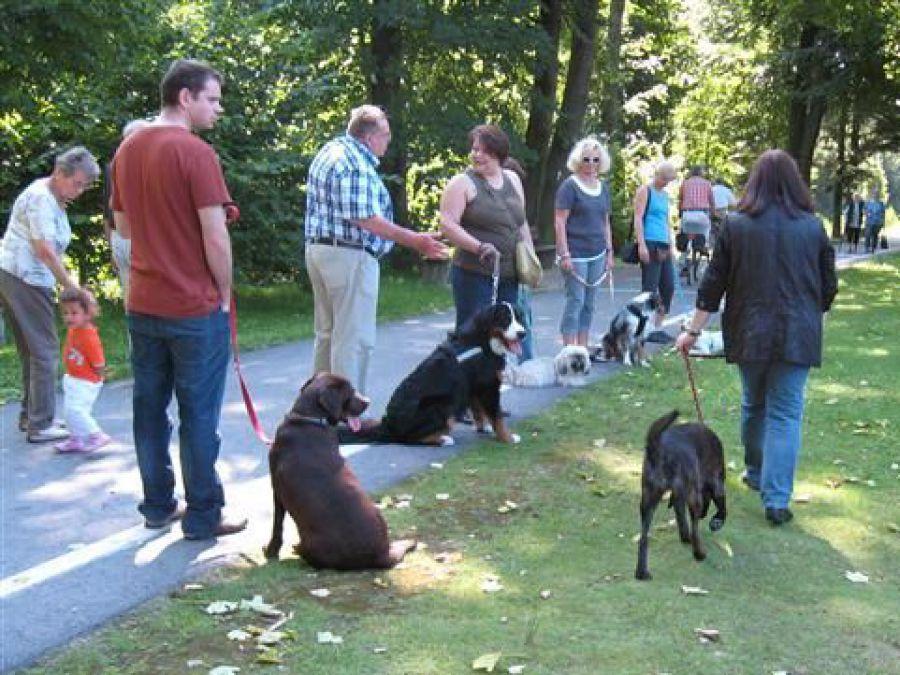 kein an der Leine ziehen, ordentliches an der Leine laufen in der Gruppe unter Ablenkung in Gladbeck bei der Hundeschule Traum-Hunde